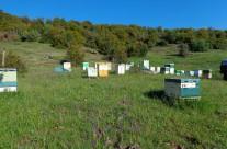 Τα μελισσοκομεία μας στον Ολυμπο