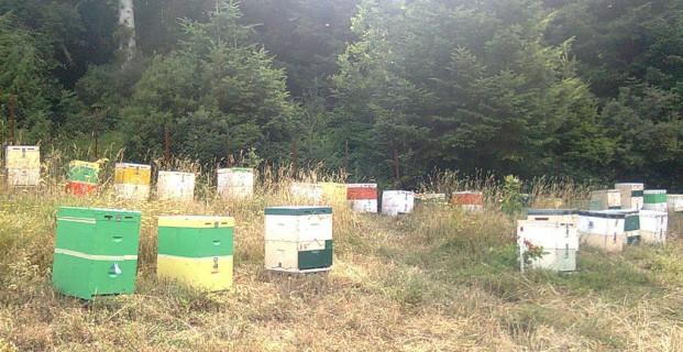 Τα μελισσοκομεία μας στον Ολυμπο 3