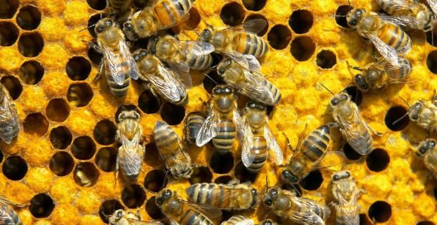 Η Μελισσοκομία στην χώρα και ειδικά στην Θεσσαλία