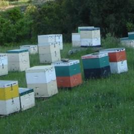 Το μελισσοκομείο