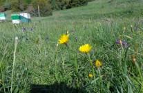 Τα μελισσοκομεία μας στην Καρυά Ολύμπου και χλωρίδα της περιοχής 2