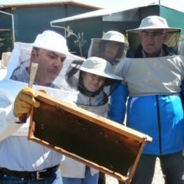 Συμμετοχή σε σεμινάρια μελισσοκομίας